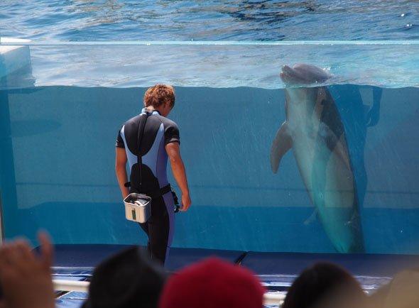 イルカとお兄さん