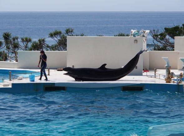 イルカの芸
