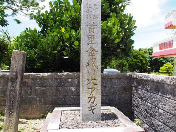 首里金城の大アカギ石碑